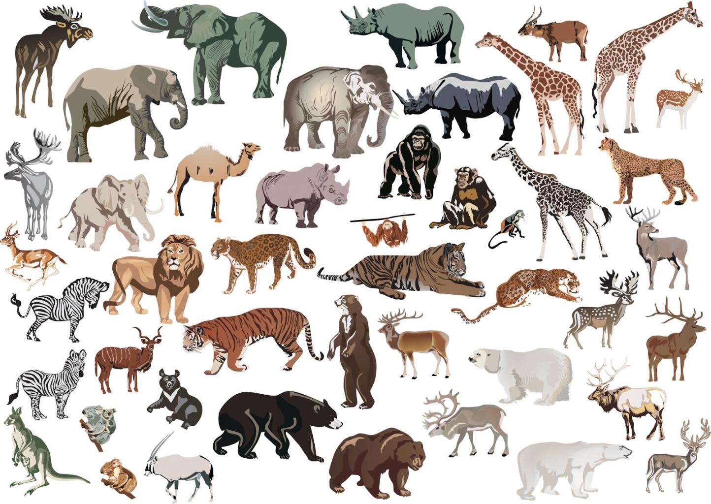 Az állatos képekkel is jó DIY falidísz készíthető.