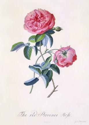 George Ehret - rózsás kép