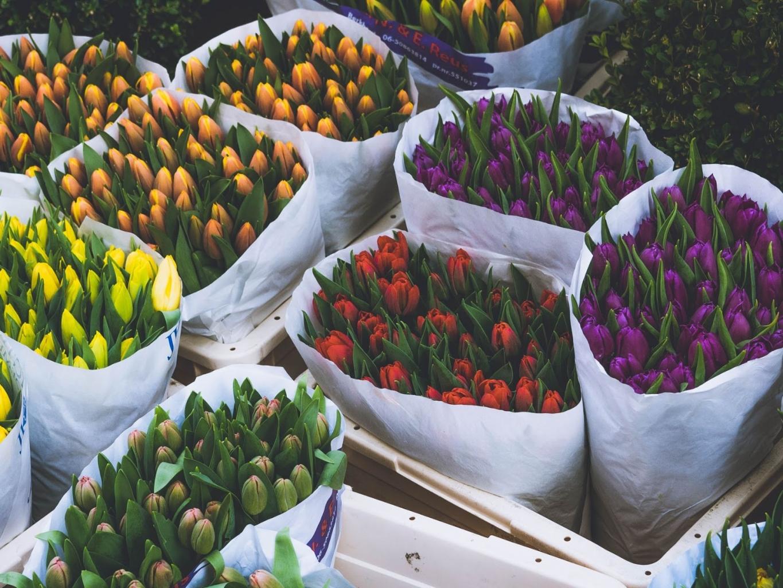 holland árverés - csokor tulipánok